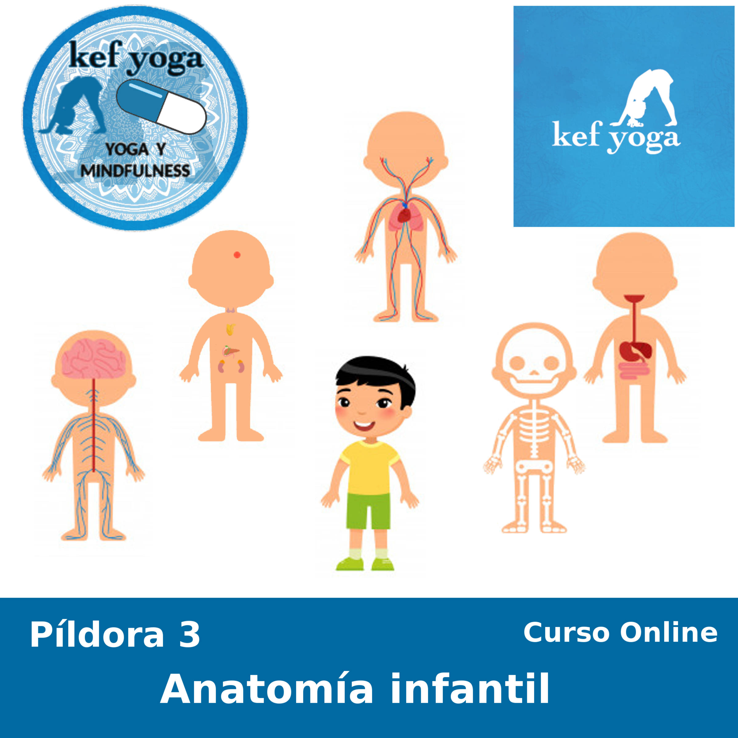 Píldora 3 – Anatomía infantil